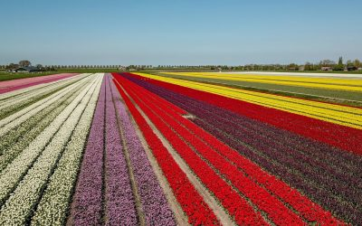 5 reasons to visit Holland during spring